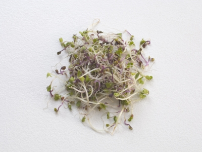 Sprouts-Broccoli-Red-Cabbage-57737 - 5 MB