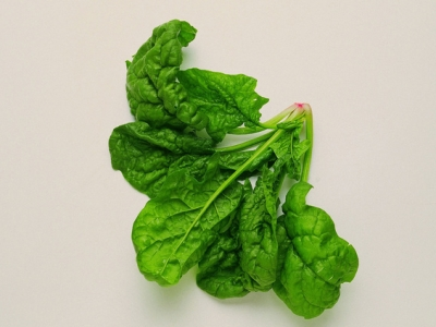 Spinach-57692 - 544 KB