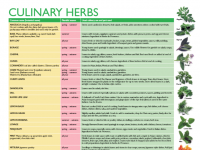 Culinary Herbs Poster Cover 2