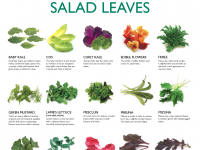 Salad Leaves 2