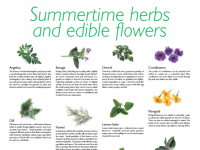 Summertime Herbs Flowers Cover