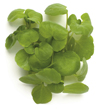 p microgreens watercress