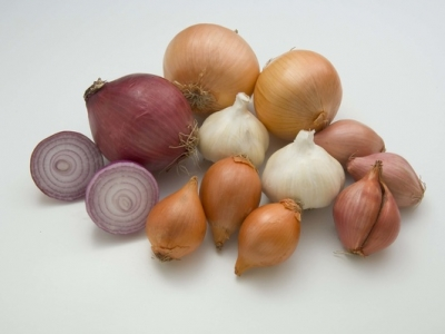 Onions-Group-57669 - 401 KB