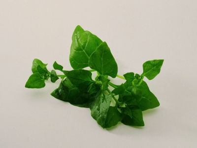 Spinach-Nz-57693 - 512 KB