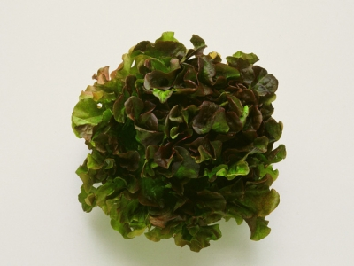 Lettuce-Red-Oak-57830 - 1.9 MB